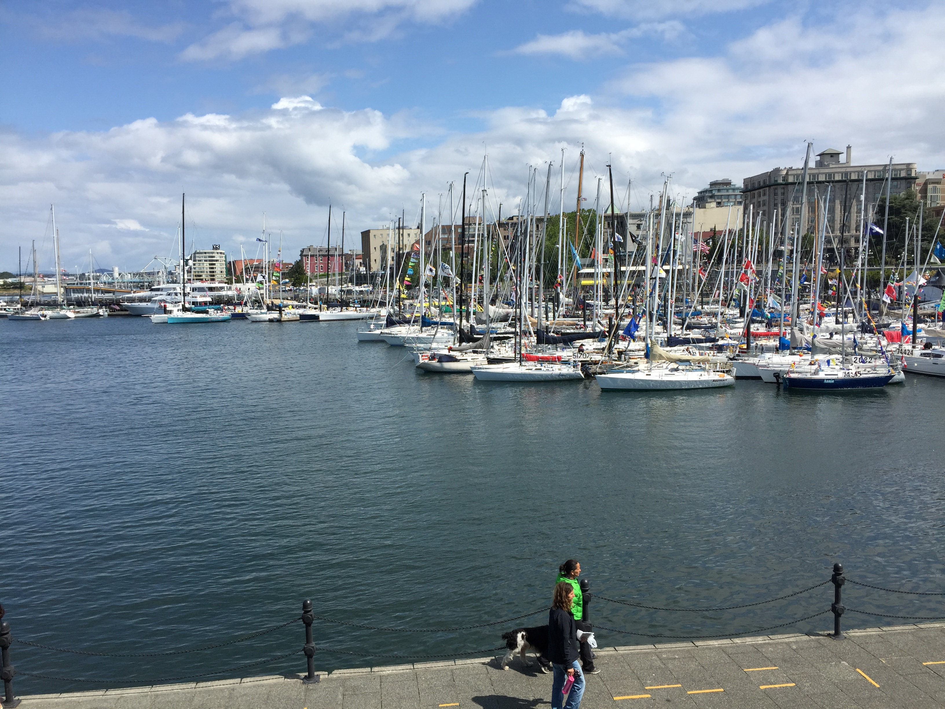 Victoria Inner Habor - packed with Swiftsure boats